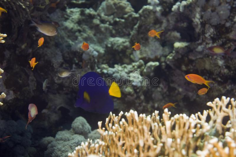 Coral and fish royalty free stock image