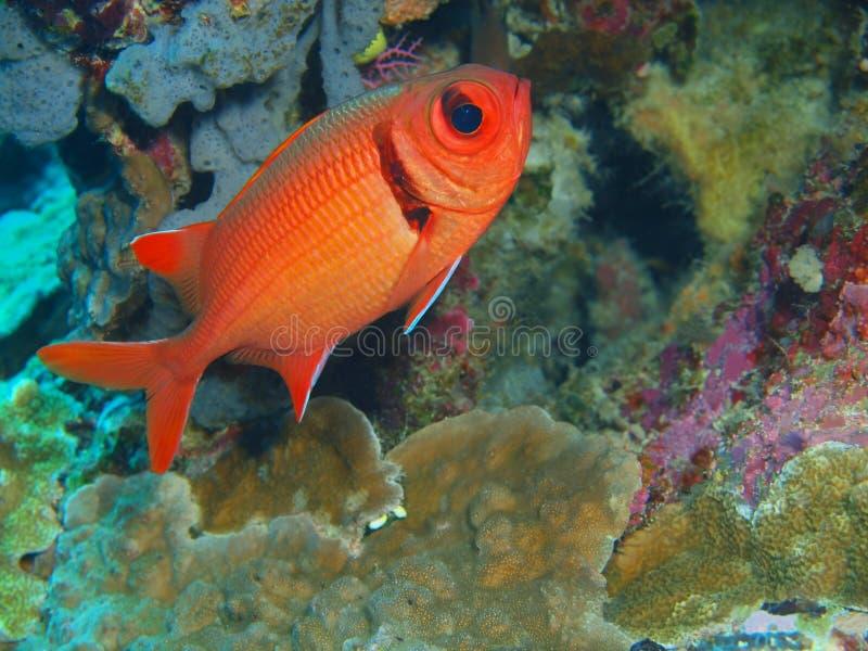 Coral Fish fotos de stock
