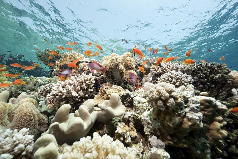 Coral and fish in the Red Sea stock photos