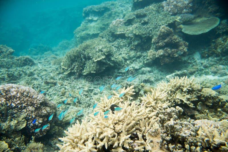 Coral Garden e Marine Life nell'oceano Pacifico fotografie stock