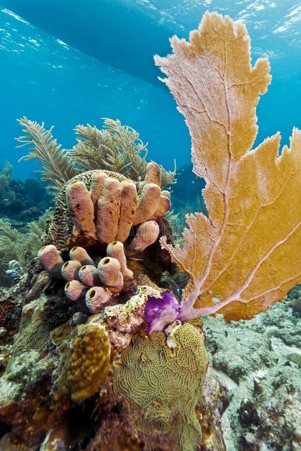 Download Coral Gardens, Honduras Royalty Free Stock Photo - Image: 23025045