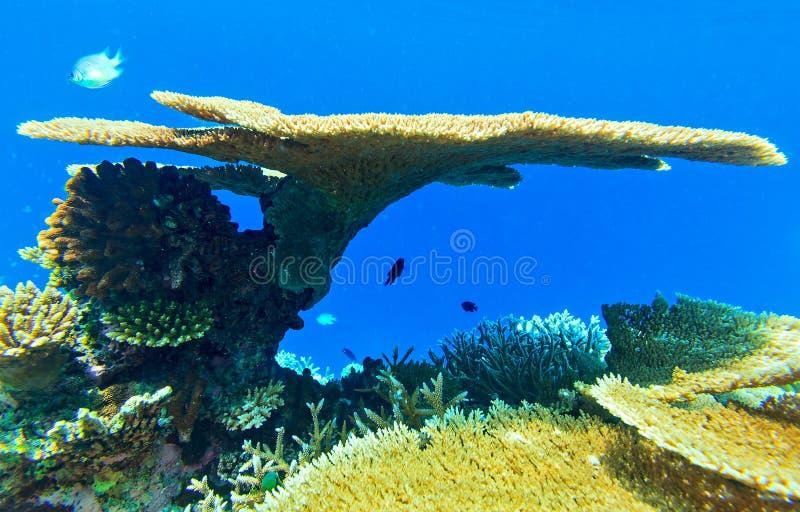 Coral grande y pequeños pescados foto de archivo libre de regalías