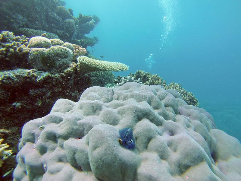 Coral on the Great Barrier Reef royalty free stock image