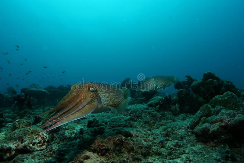 Coral life underwater diving safari Caribbean Sea stock photography