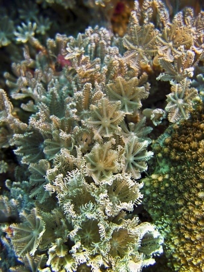 Coral macio da flor imagens de stock