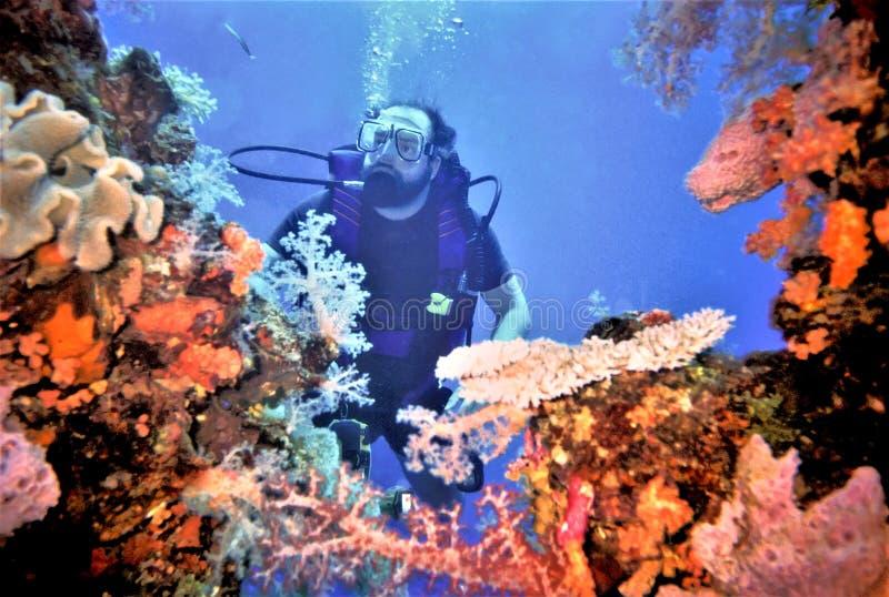 Coral macio de Surveys Truk Lagoon do mergulhador fotografia de stock royalty free