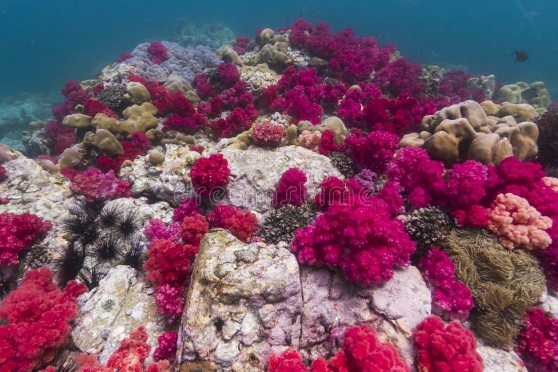 Coral macio na ilha de Lipe foto de stock royalty free