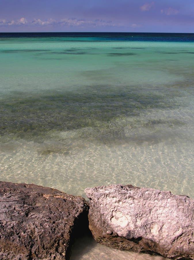 Download Coral na plaży zdjęcie stock. Obraz złożonej z uczucia - 138722