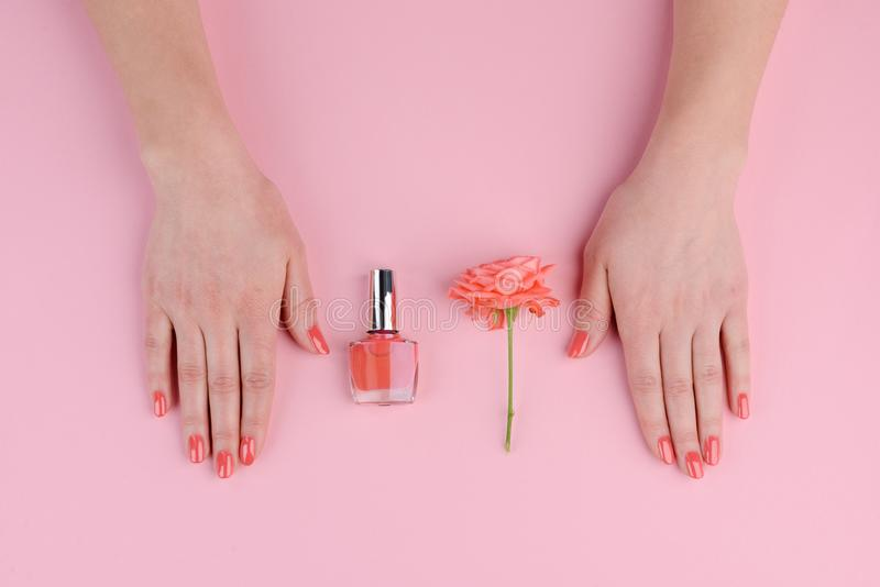 Coral nails and rose bud stock image