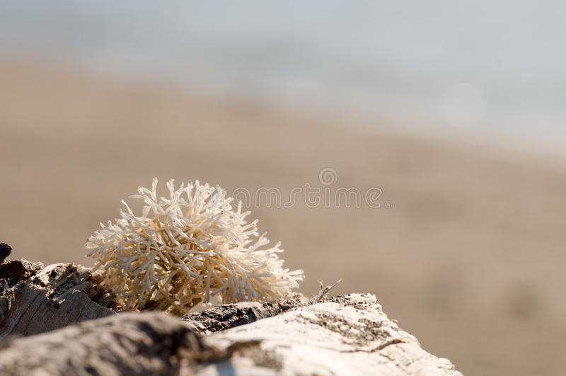 Coral no sol fotografia de stock royalty free