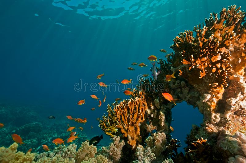 Download Coral, ocean and fish stock image. Image of fish, water - 8531633