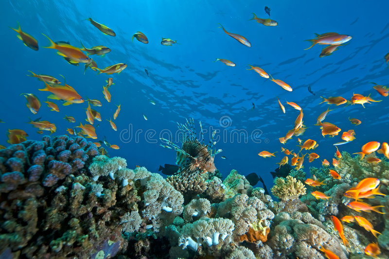 Coral, ocean and fish royalty free stock photos