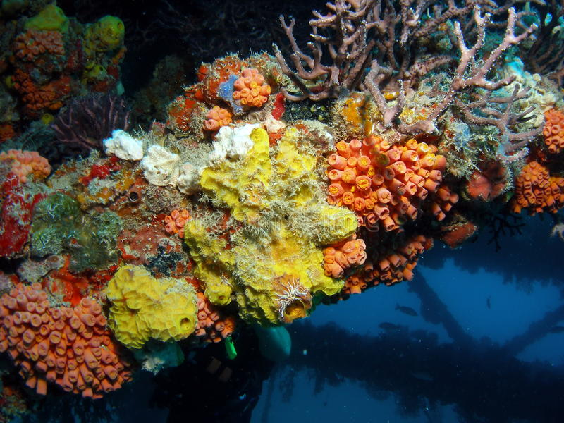 Coral on a oil Platform stock photography