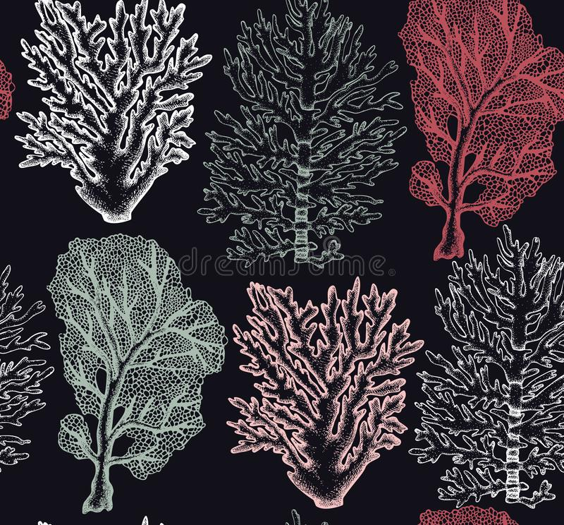 Seamless pattern with hand drawn sea fans corals - gorgonia sketch. Vector background with underwater natural elements. Vintage se vector illustration