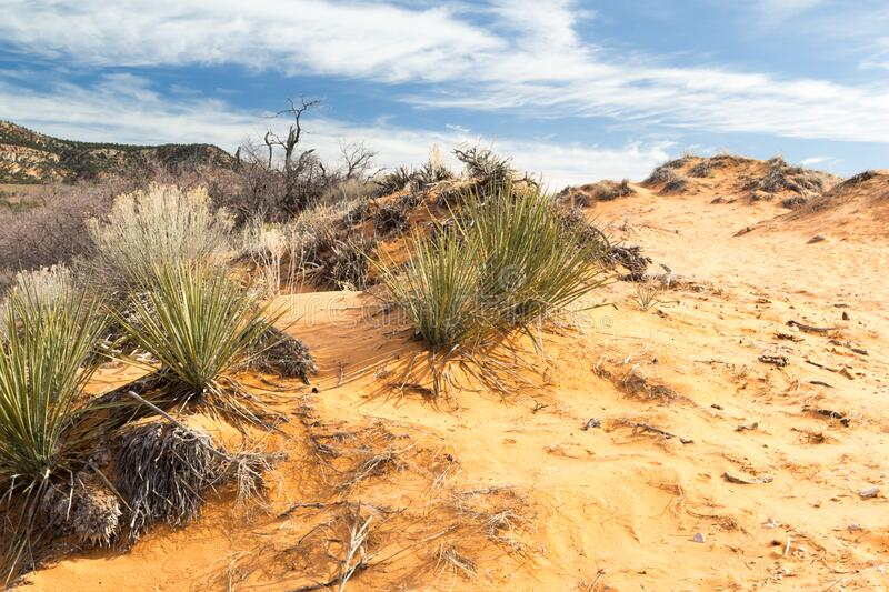 Coral Pink Sand Dunes State Park royalty free stock photo