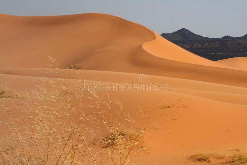 Download Coral Pink Sand Dunes State Park, Utah Stock Photo - Image: 25306100