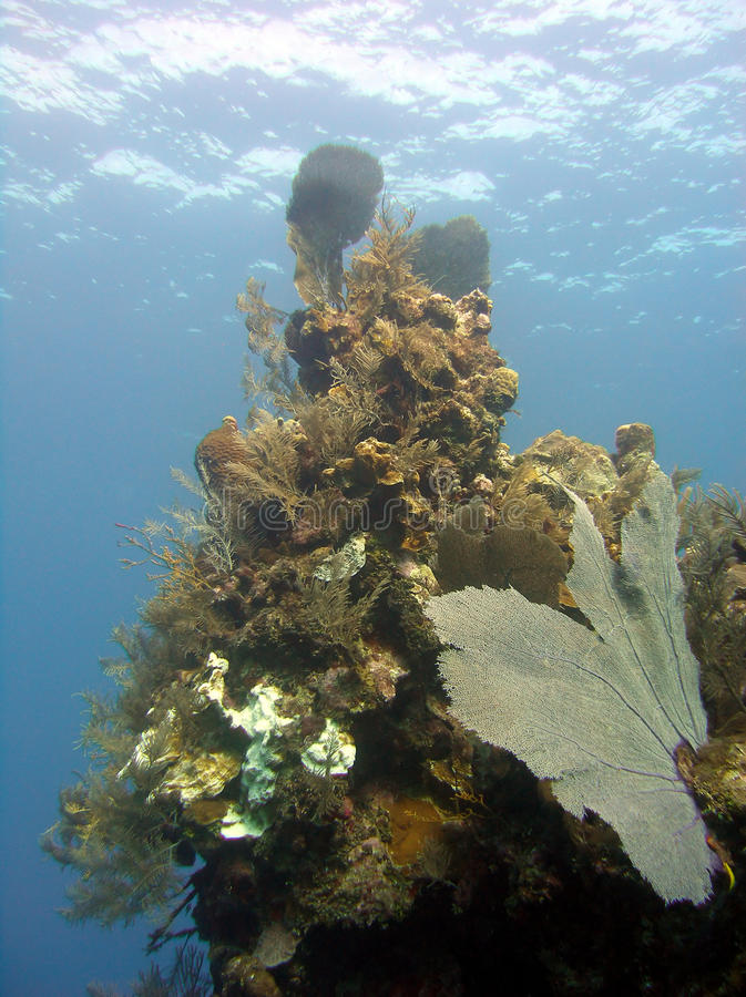 Coral pinnacle stock image