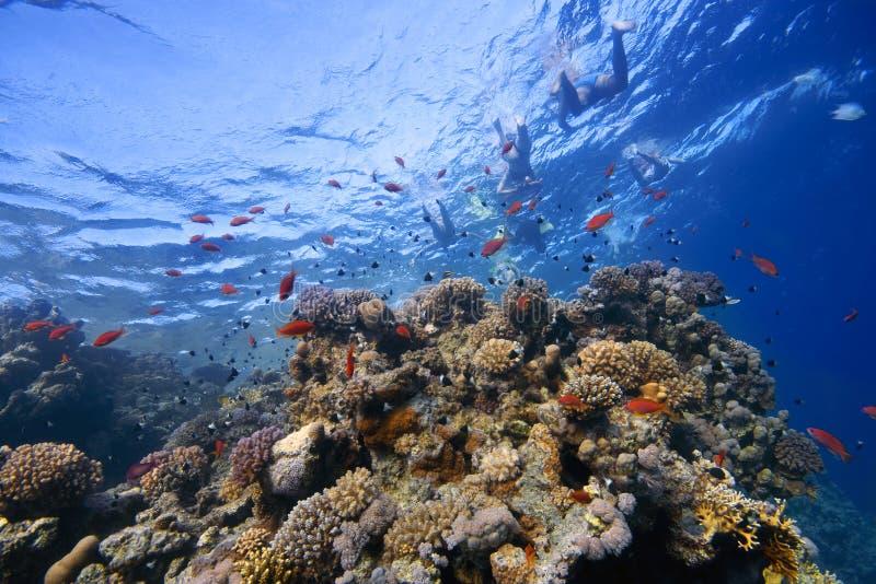 Coral-Recife na água pouco profunda com peixes ao redor imagem de stock