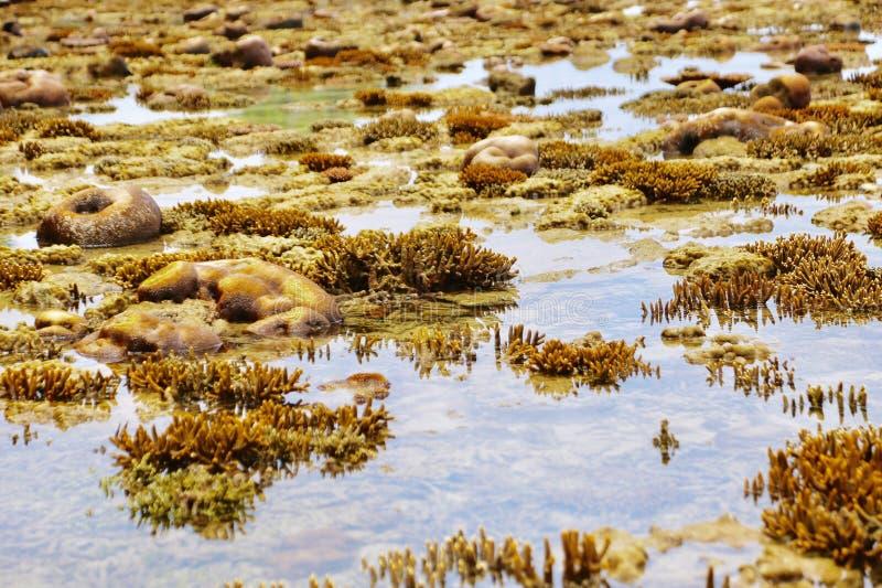 Coral Reef royaltyfri fotografi