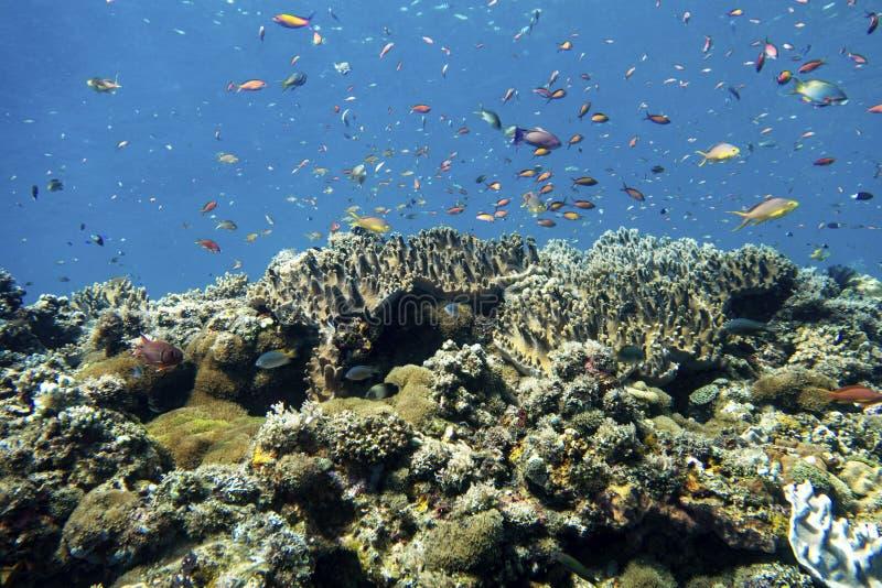 Coral Reef arkivbilder