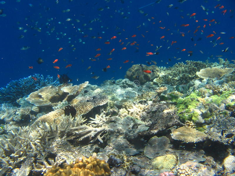 Download Coral Reef stock image. Image of life, diving, dive, colorful - 12269715