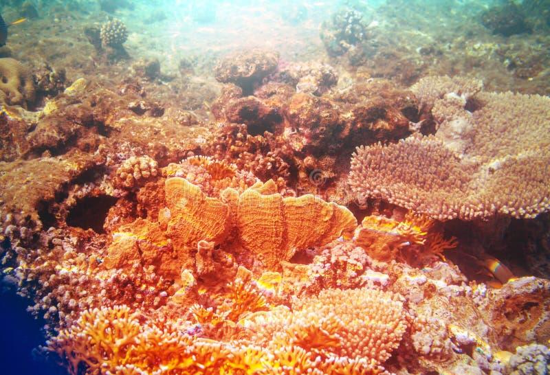 Coral Reef fotografia de stock royalty free