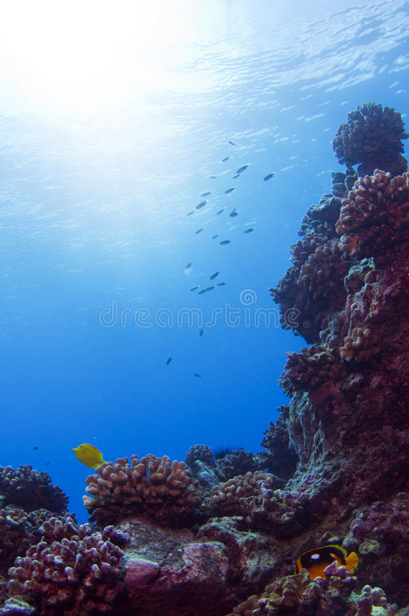 Free Coral Reef Royalty Free Stock Image - 16273436