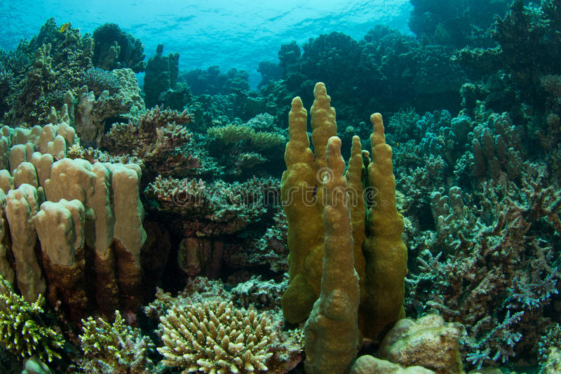 Coral Reef. This beautiful dive site full of corals is called The Islands stock photos