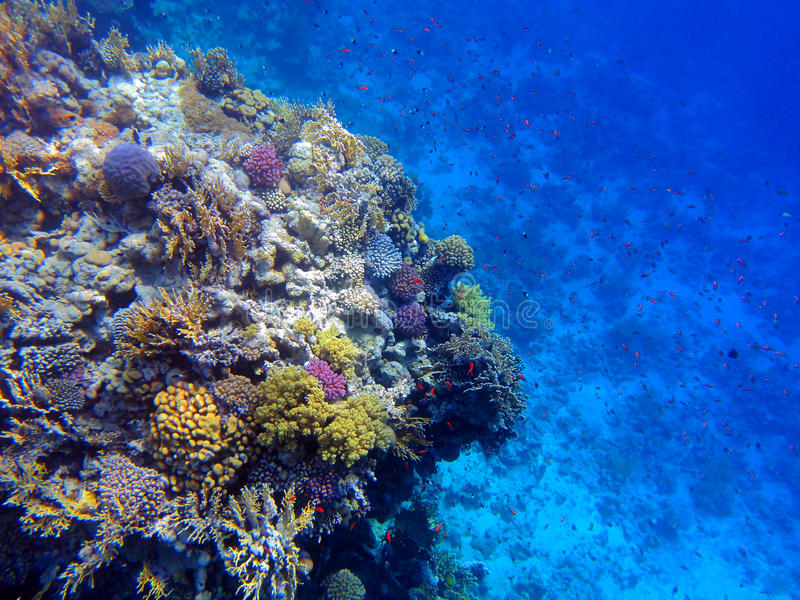 Download Coral reef stock image. Image of tropical, underwater - 20662165