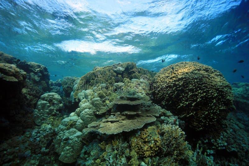 Download Coral reef stock image. Image of scuba, adventure, subaqua - 22385341