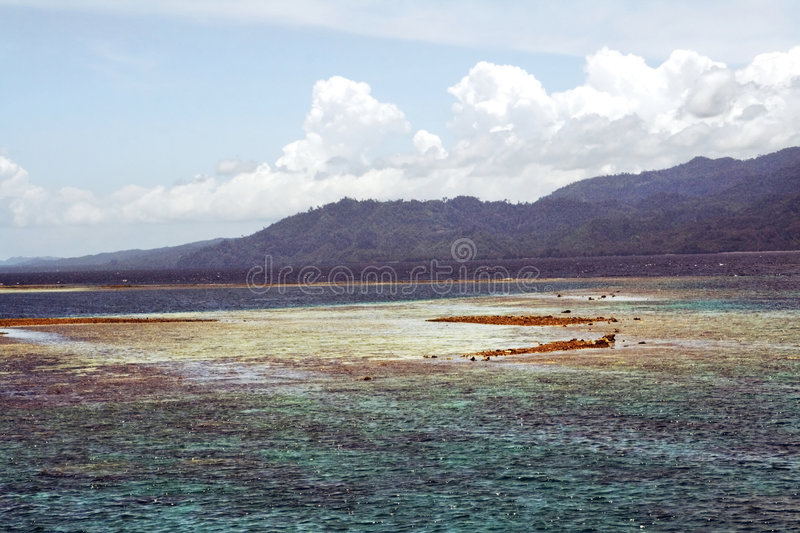 Download Coral reef stock photo. Image of maluku, water, exposed - 2238892