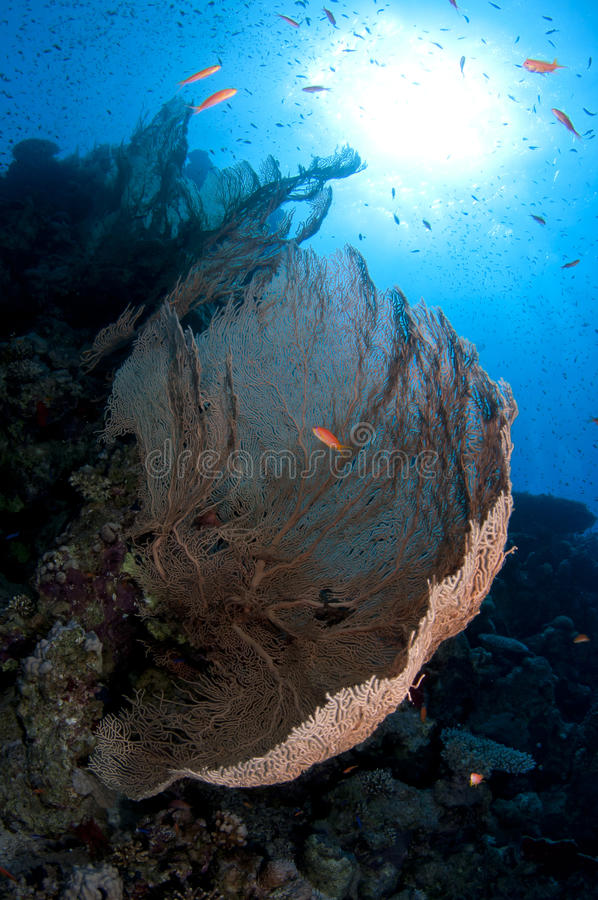 Download Coral reef stock image. Image of sports, coral, fish - 24555491