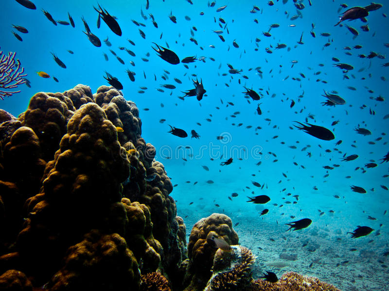 Coral Reef royalty free stock images