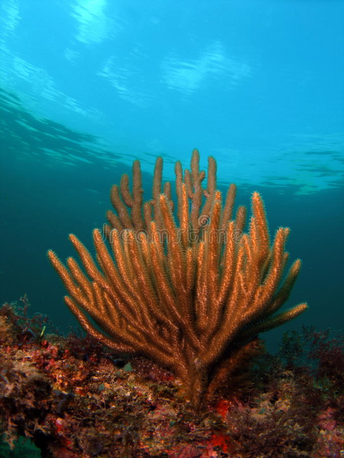 Download Coral Reef stock photo. Image of reef, tropical, colourful - 26455322