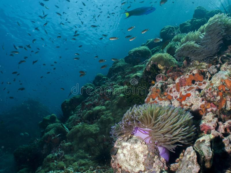 Download Coral Reef stock image. Image of dive, fish, garden, reef - 27818687