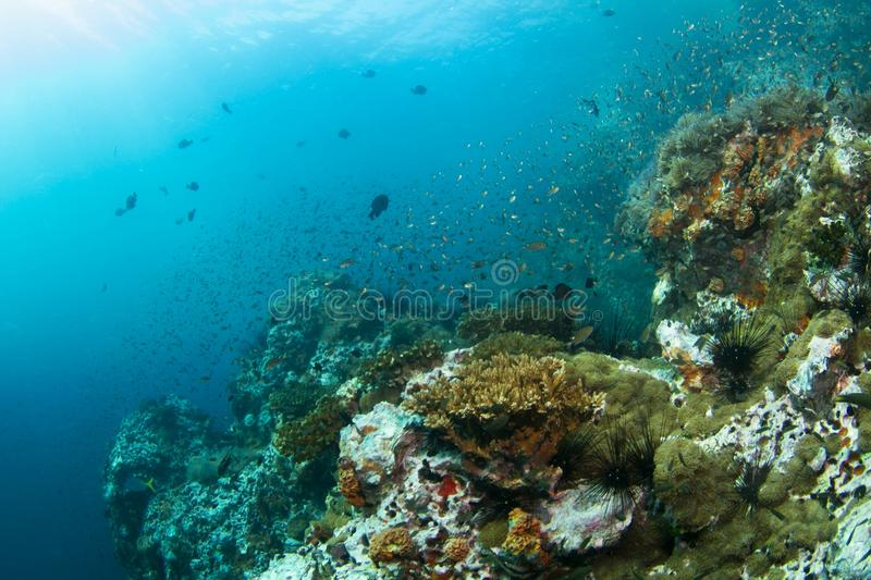 Download Coral Reef Stock Images - Image: 27860354