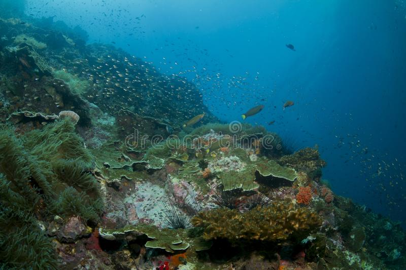 Download Coral Reef stock image. Image of seascape, life, underwater - 27860551