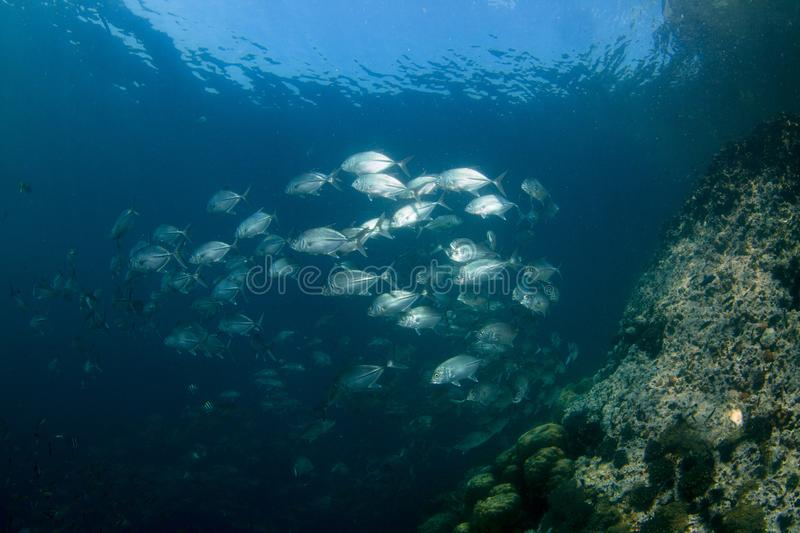 Download Coral Reef stock image. Image of coral, anemone, life - 27860691