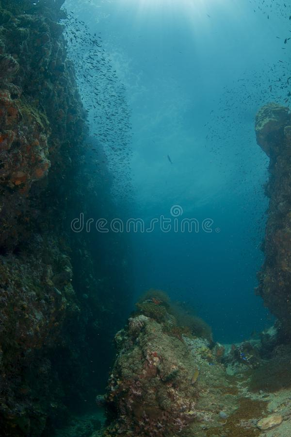 Download Coral Reef stock image. Image of topography, tropical - 27860795