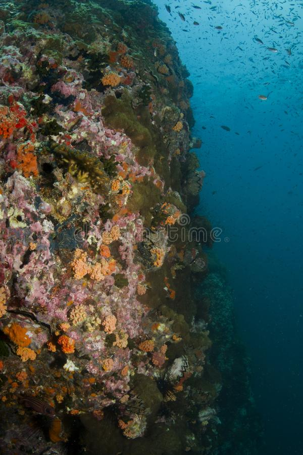 Download Coral Reef stock photo. Image of shell, diver, coral - 27860898