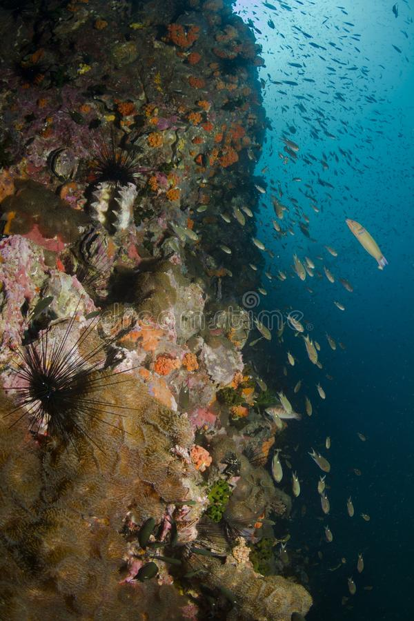 Download Coral Reef stock image. Image of fishy, snail, garden - 27861127