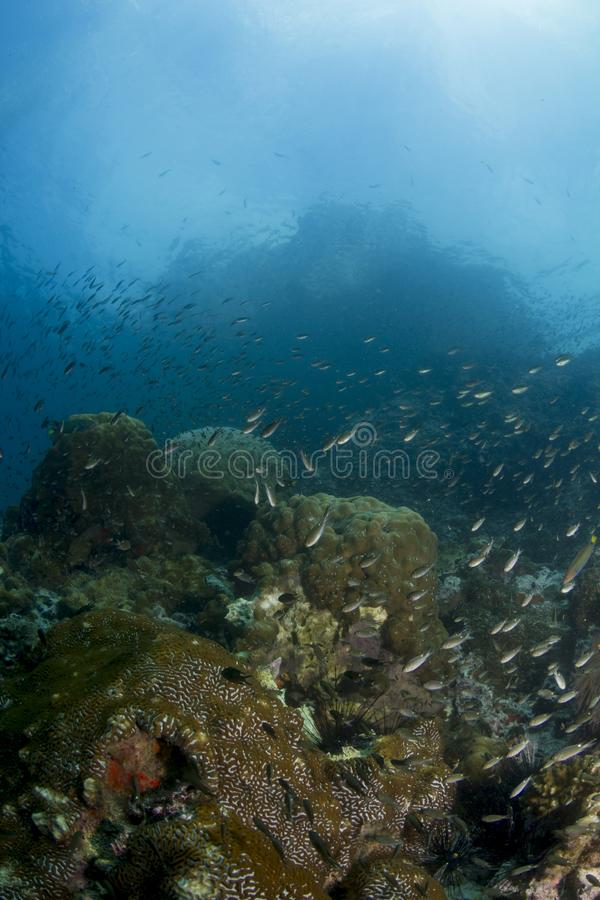 Download Coral Reef stock photo. Image of nudibranch, shell, underwater - 27861262