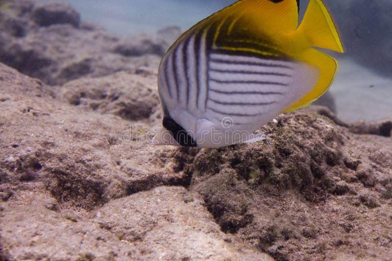 Coral Reef 2916 stock images