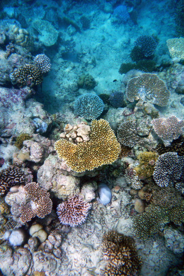Coral Reef immagine stock libera da diritti