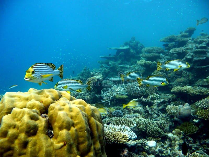 Coral Reef lizenzfreie stockfotos