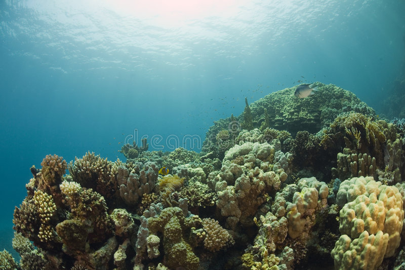 Coral Reef. Underwater scene of a tropical coral reef stock photo