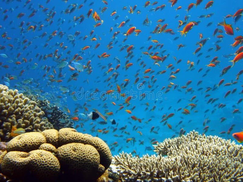 Download Coral reef stock image. Image of eilat, under, underwater - 3758551