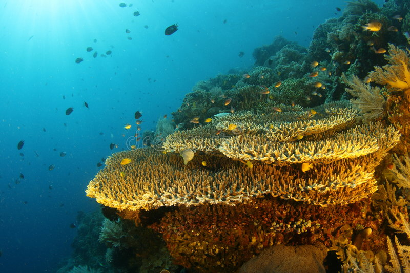 Coral Reef royalty free stock photos