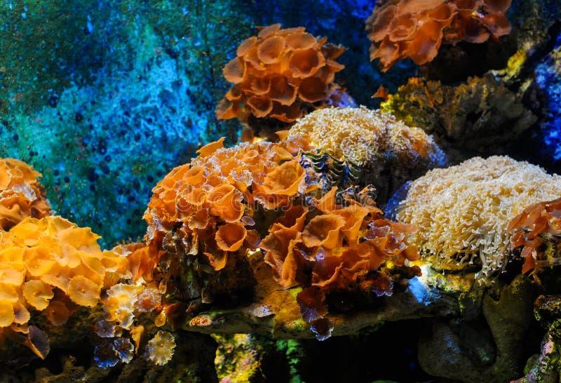 Coral Reef foto de archivo libre de regalías