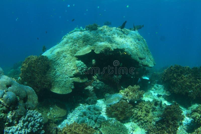 Download Coral Reef foto de stock. Imagem de undersea, subaquático - 65577746